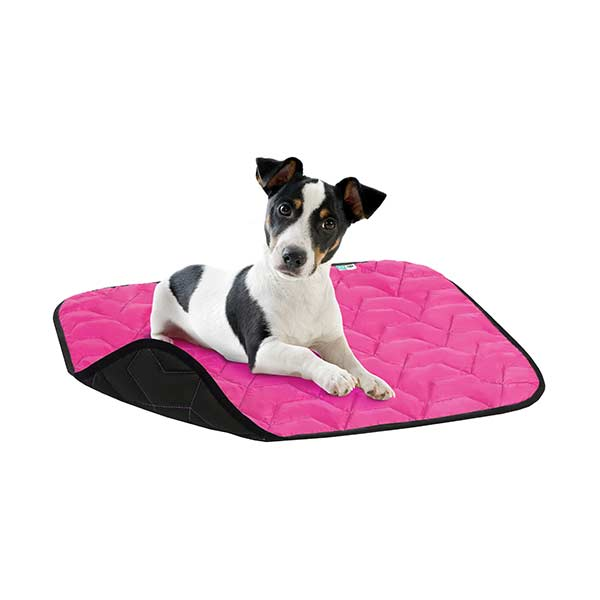 airvest dogmat rosa