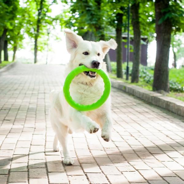 lecleps pitchdog 3