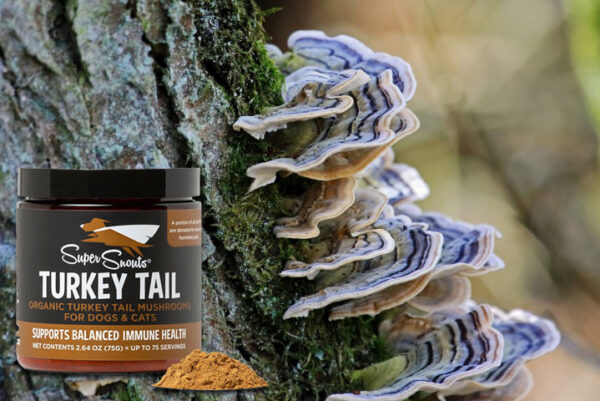 Turkey Tail - Le Clep's